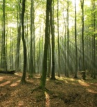 Log Home Community