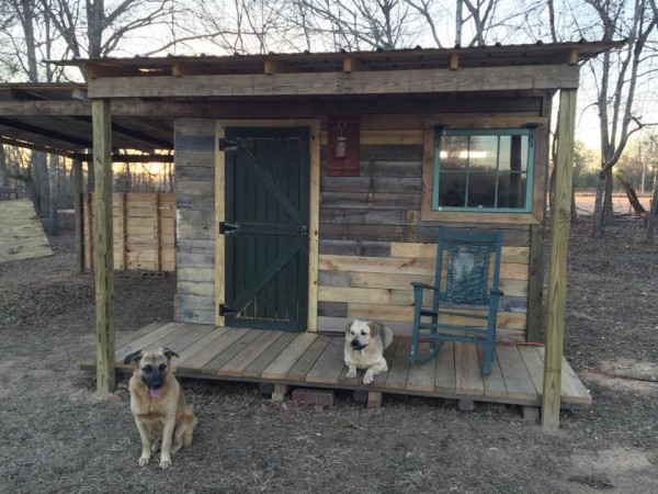 Pallet cabin with dogs.