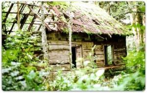 Decrepit log cabin in the woods.