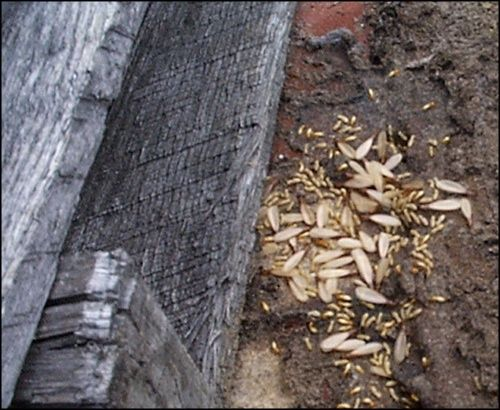 Signs of termites.